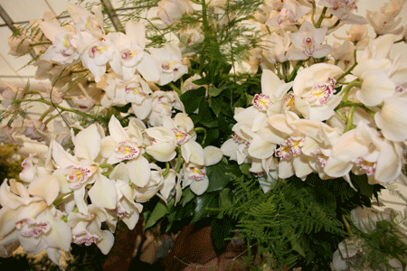cymbidium from flora art festival